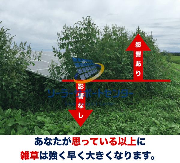 雑草により悪影響を受ける太陽光パネル