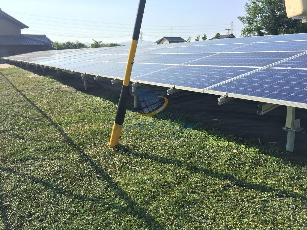 【クラピア】野立て太陽光発電雑草対策事例・岐阜県安八郡YD様
