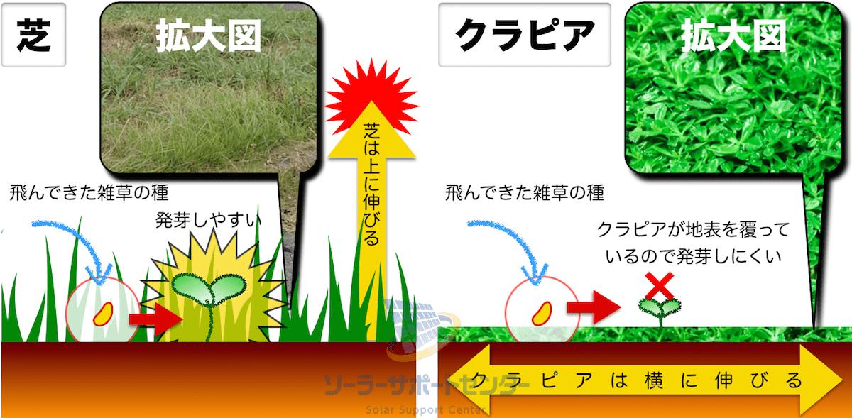 クラピアが雑草を抑制する仕組みの図解