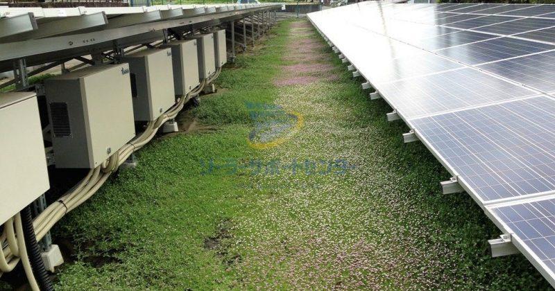 【クラピア】野立て太陽光発電雑草対策事例・岐阜県瑞浪市OG様