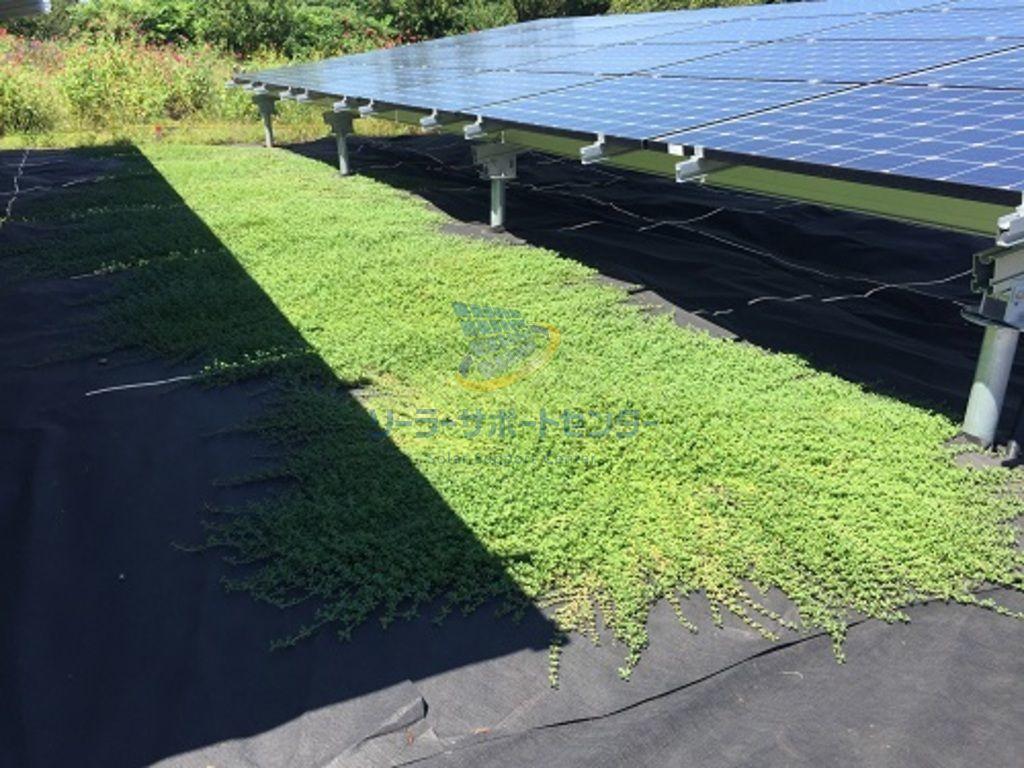 クラピアの広がり始めた太陽光発電所