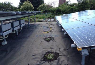 植えたばかりのクラピアと太陽光パネル