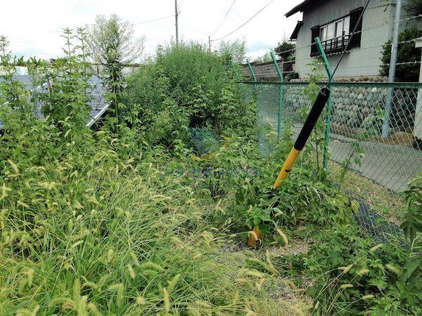 太陽光発電所の草刈り前1
