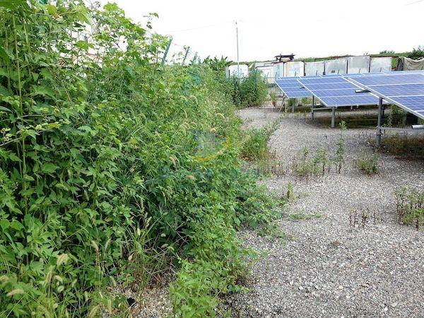 太陽光発電所の草刈り前2