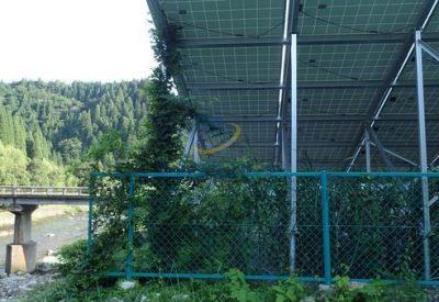 太陽光発電の架台に蔦が絡まっている写真