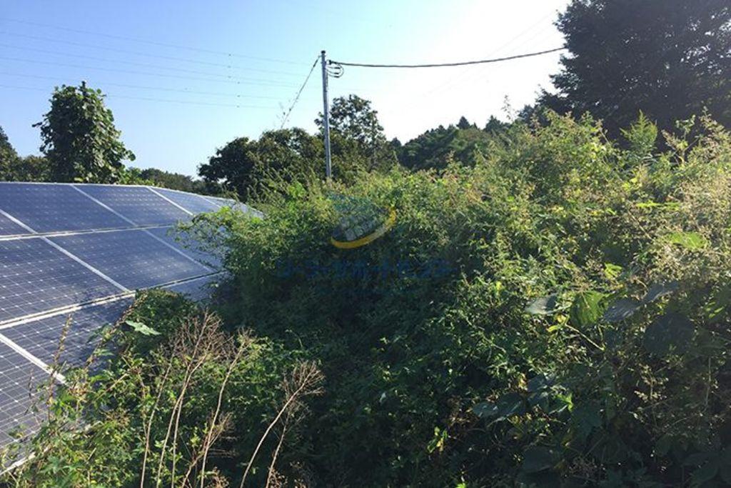 雑草の生い茂る太陽光発電所