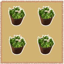 クラピア植栽数のイメージ