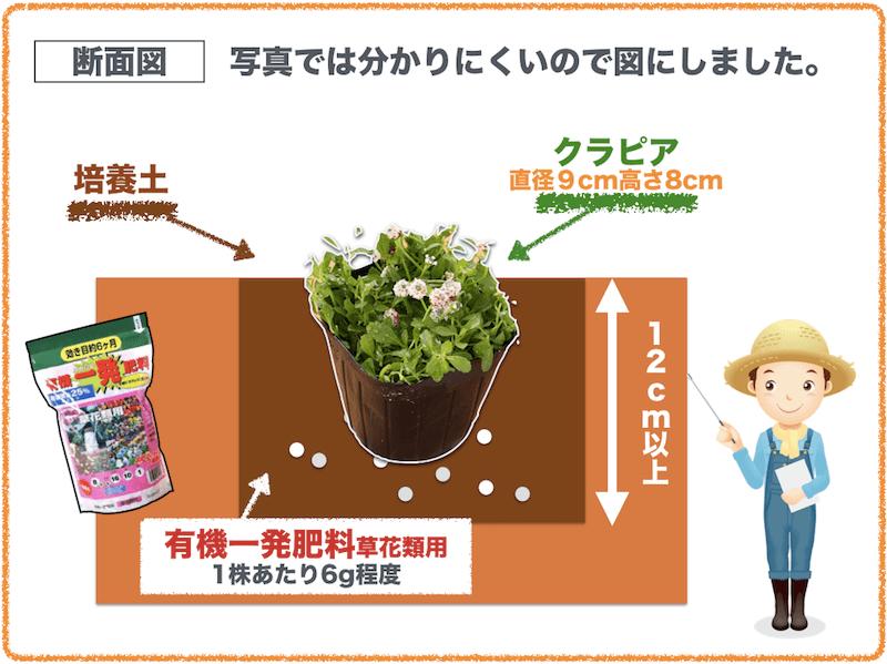 クラピア植え方・培養土と肥料の位置関係