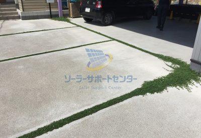 家の駐車場に植えたクラピアの画像
