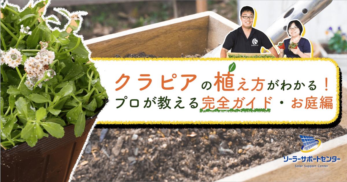 クラピア植え方完全ガイドお庭編