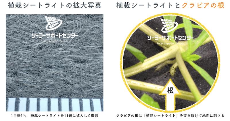 植栽シートライトの拡大画像とクラピアの根