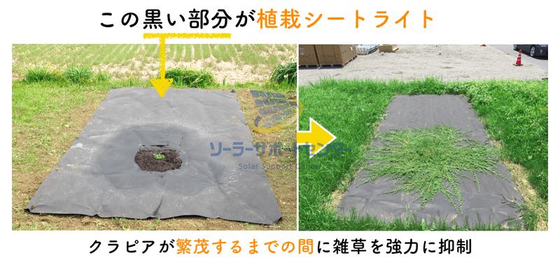 植栽シートライトの有無で雑草抑制の効果を比較した画像