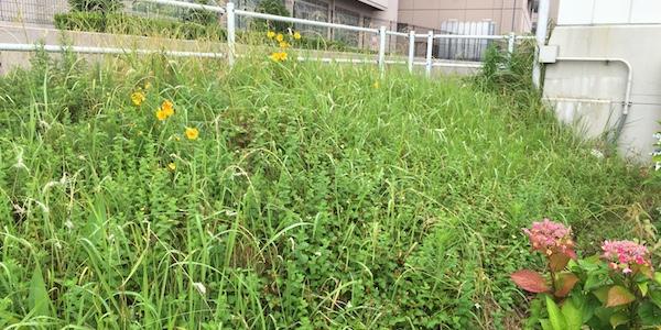 雑草だらけの敷地