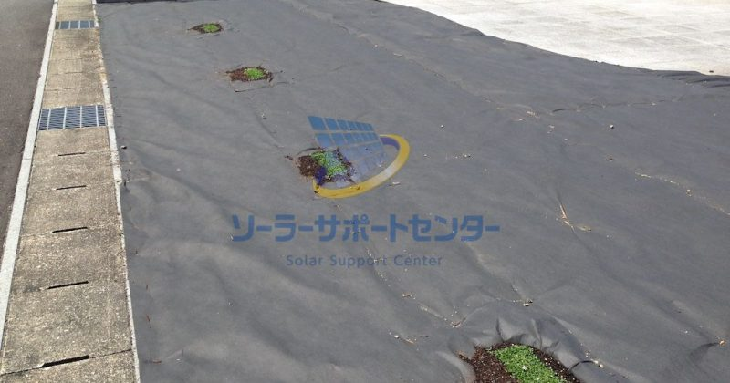 【クラピア】雑草対策、緑化事例・愛知県稲沢市K様