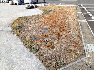 雑草対策前の様子2