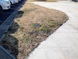 雑草対策前の様子1
