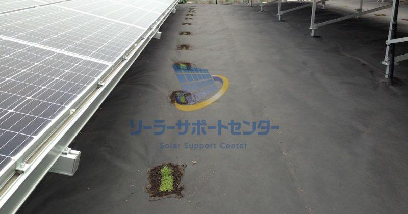 【クラピア】野立て太陽光発電雑草対策事例・愛知県あま市Y様