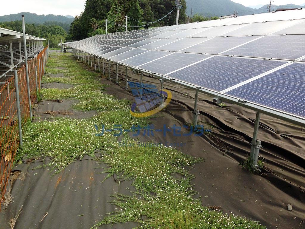 【クラピア】野立て太陽光発電雑草対策事例・三重県松坂市K様