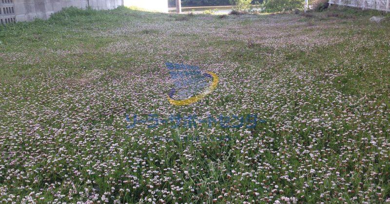 クラピア】雑草対策、緑化事例・愛知県名古屋市K様