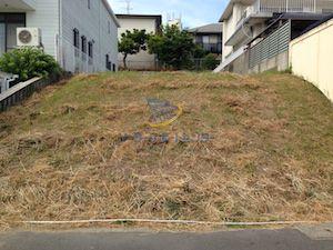 雑草対策前の写真1