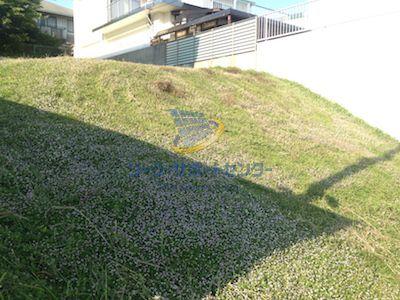 クラピア繁茂後の写真1