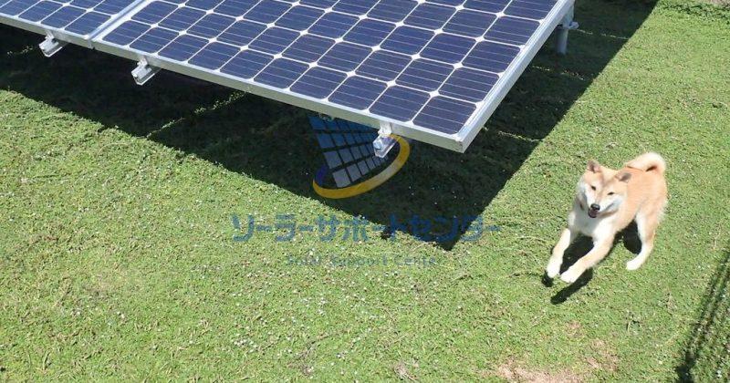 【クラピア】野立て太陽光発電雑草対策事例・岐阜県加茂郡K様