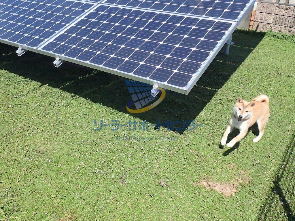 クラピアを導入した太陽光発電所