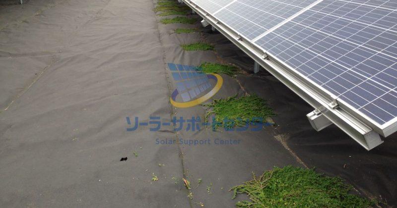 【クラピア】野立て太陽光発電雑草対策事例・三重県津市T様