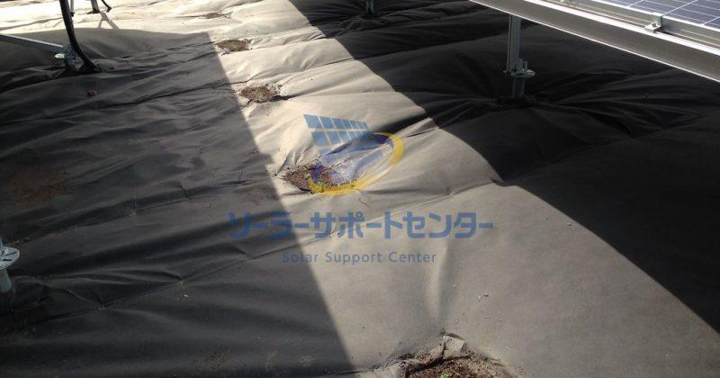 【クラピア】野立て太陽光発電雑草対策事例・三重県津市TS様