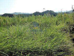 雑草が生い茂る様子