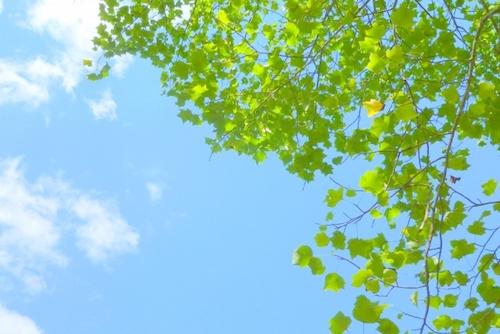 青空と新緑の写真