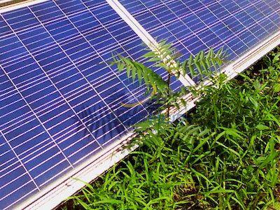 太陽光パネルに雑草がかかる様子