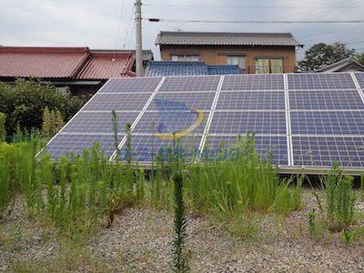 砕石をした太陽光発電所に生える雑草2