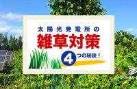 お庭・空き地で応用できる太陽光発電の雑草対策|防草効果と成功率を上げる4つの秘訣