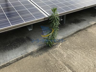 コンクリートによる太陽光発電所の雑草対策