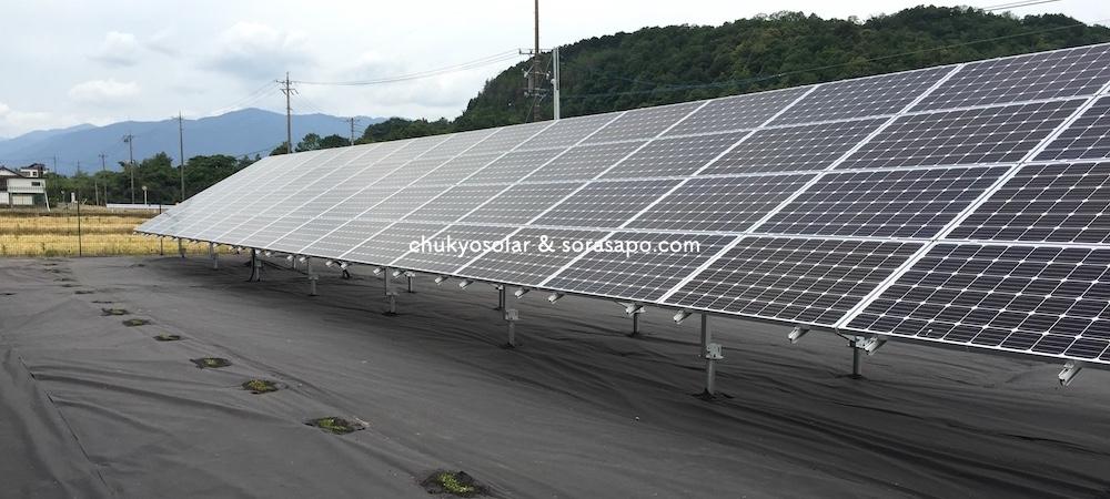 クラピアを植栽した太陽光発電所の1年後の写真