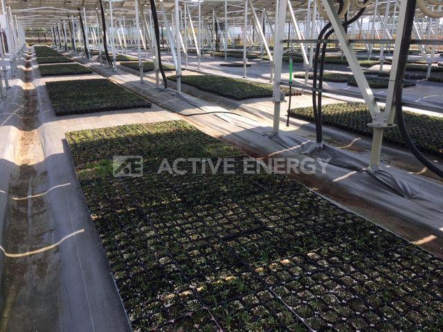 ソーラーシェアリングの施工事例1 玉竜の栽培