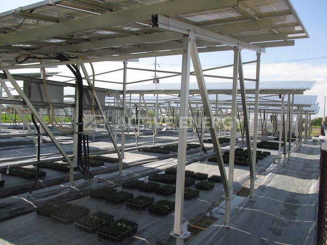 ソーラーシェアリングの施工事例2 玉竜の栽培