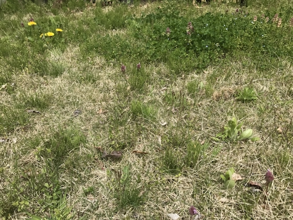 庭に生えた雑草