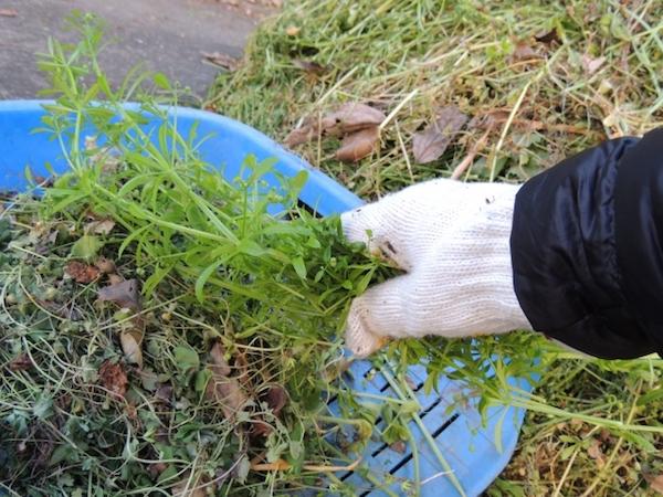 庭の草むしり