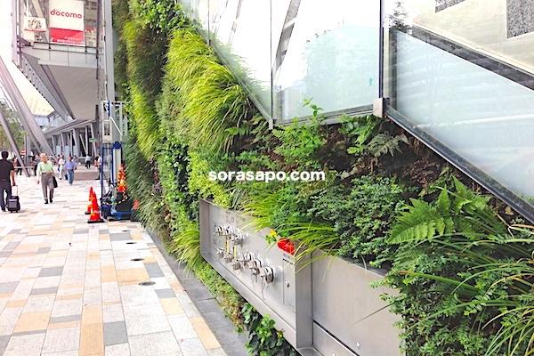 グランドカバーと壁面緑化