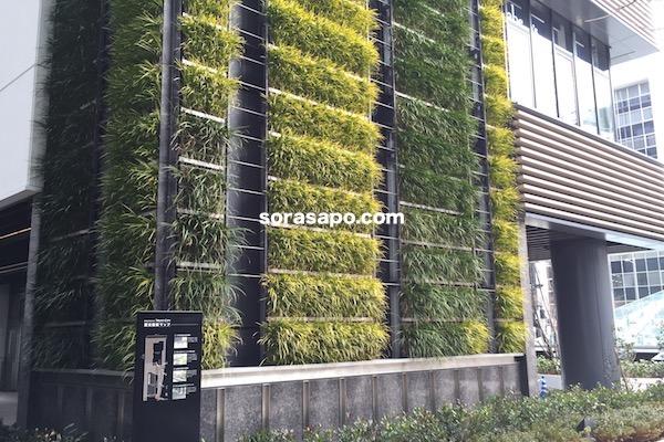 壁面緑化も広義のグランドカバー