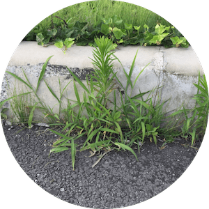 アスファルトとコンクリートの隙間から生える雑草