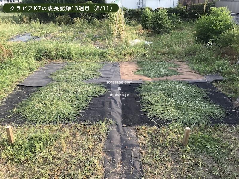 13週目(8/11)猛暑の中、直植え部分を40分かけて草刈りしました… シート併用クラピアは本当に管理が楽です。