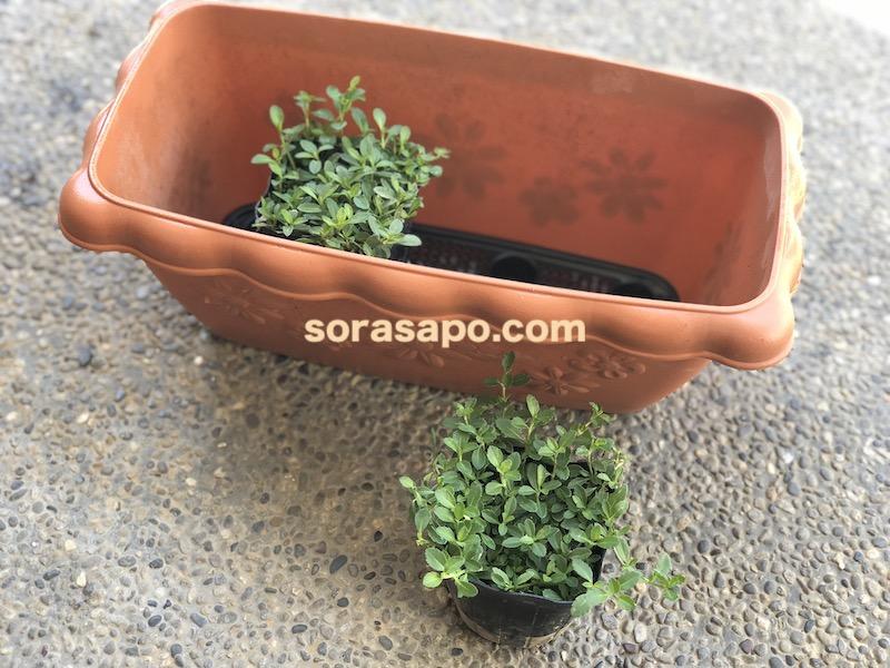クラピアを一時的に植えるためのプランター