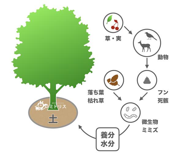 自然界での栄養の循環
